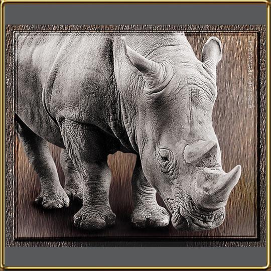 Foto ilustração com rinoceronte, zoológico do rio de janeiro